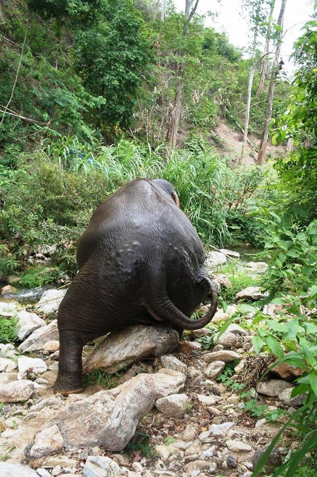 se-retiran-dos-elefantes-y-se-enamoran-5