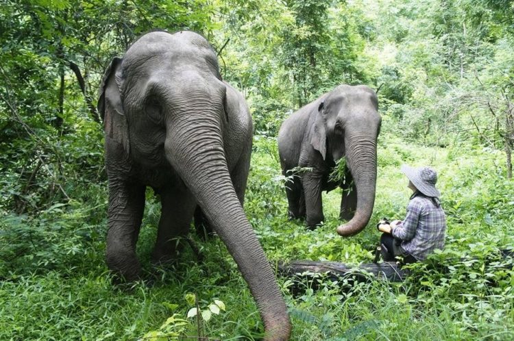 se-retiran-dos-elefantes-y-se-enamoran-6