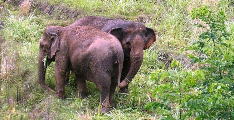 se-retiran-dos-elefantes-y-se-enamoran-7