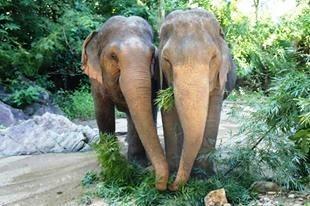 se-retiran-dos-elefantes-y-se-enamoran-8