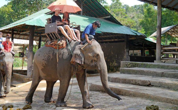 turistas-deben-negarse-a-dar-paseos-en-elefantes-para-librarlos-del-dolor-de-su-alma-rota-1