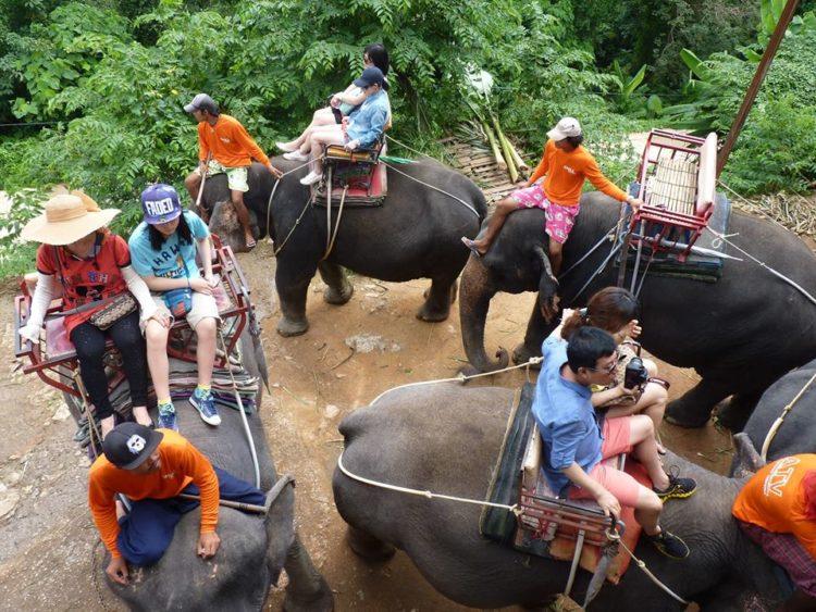 turistas-deben-negarse-a-dar-paseos-en-elefantes-para-librarlos-del-dolor-de-su-alma-rota-12