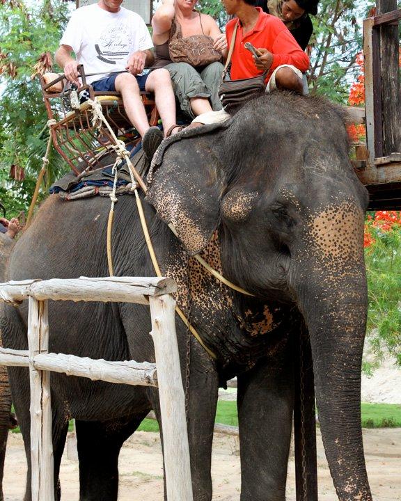 turistas-deben-negarse-a-dar-paseos-en-elefantes-para-librarlos-del-dolor-de-su-alma-rota-13