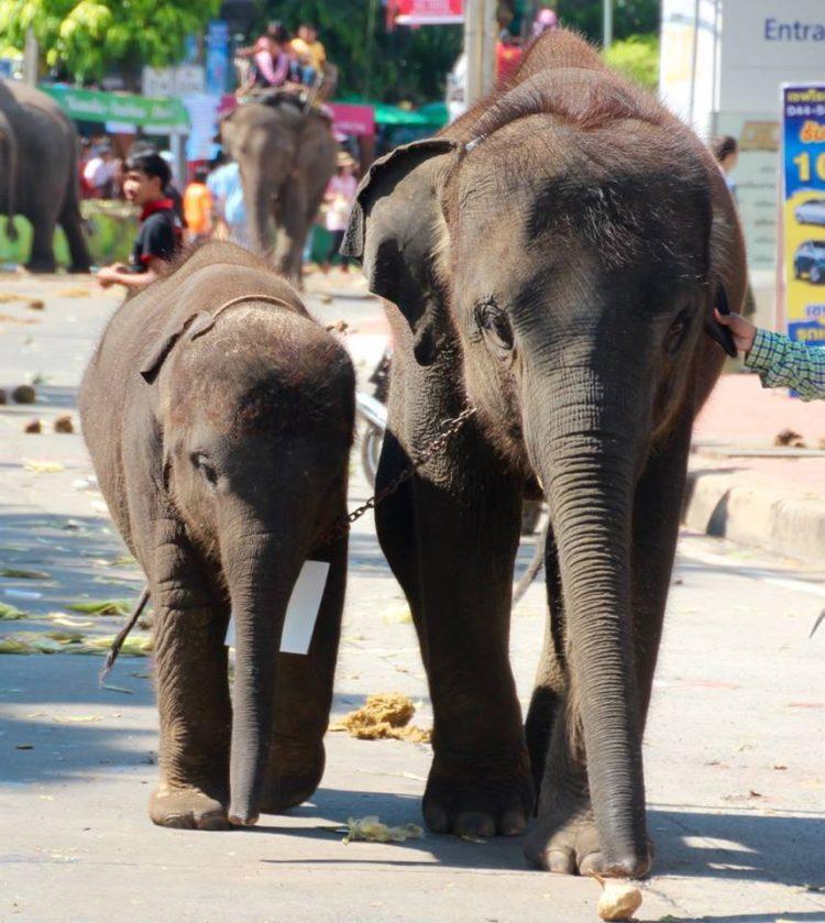 turistas-deben-negarse-a-dar-paseos-en-elefantes-para-librarlos-del-dolor-de-su-alma-rota-14