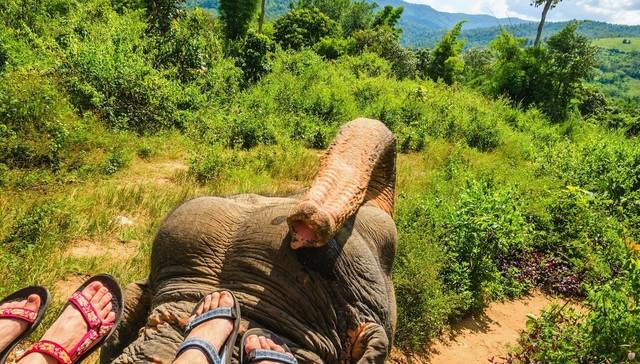 turistas-deben-negarse-a-dar-paseos-en-elefantes-para-librarlos-del-dolor-de-su-alma-rota-16