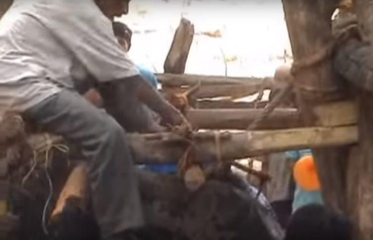 turistas-deben-negarse-a-dar-paseos-en-elefantes-para-librarlos-del-dolor-de-su-alma-rota-5
