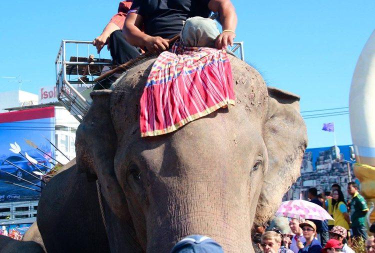 turistas-deben-negarse-a-dar-paseos-en-elefantes-para-librarlos-del-dolor-de-su-alma-rota-7