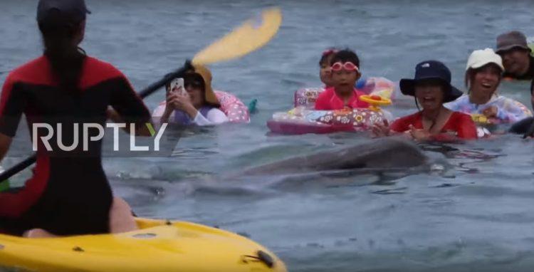 turistas-nadan-con-delfines-en-las-aguas-de-taiji-japon-donde-seran-sacrificados-al-iniciar-temporada-de-caceria-2