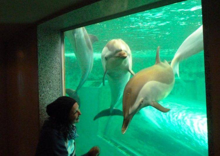 turistas-nadan-con-delfines-en-las-aguas-de-taiji-japon-donde-seran-sacrificados-al-iniciar-temporada-de-caceria-8