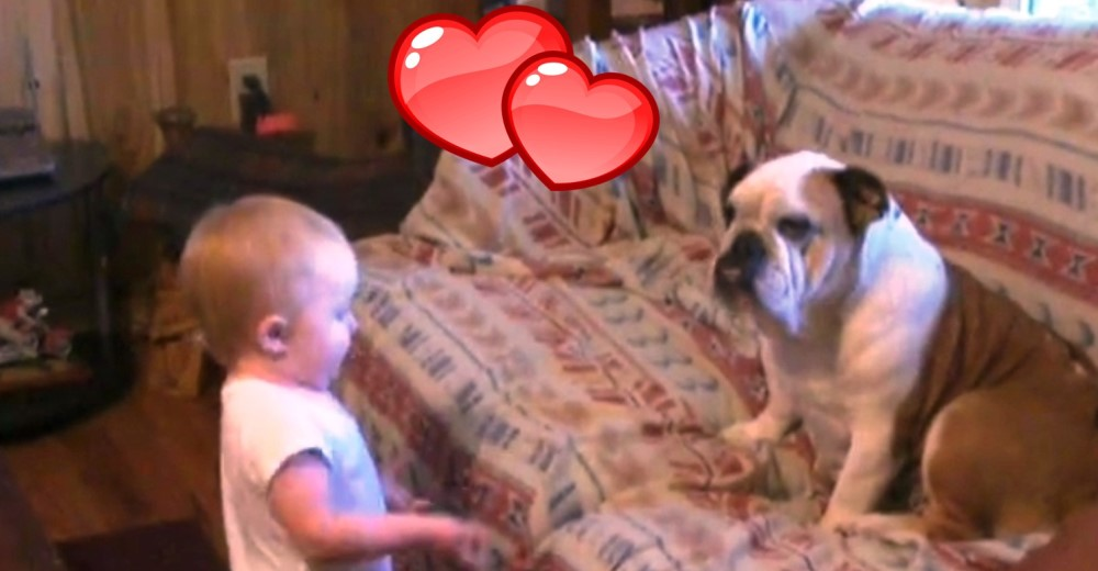 bulldog-bebe-conversando-video-rumble-copy