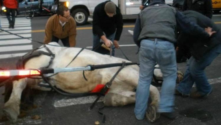 caballo-carruaje3