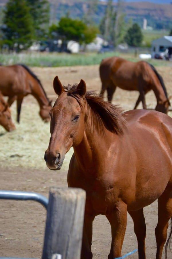 caballos-otono1