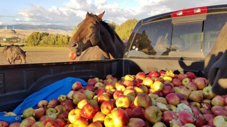 caballos-otono5