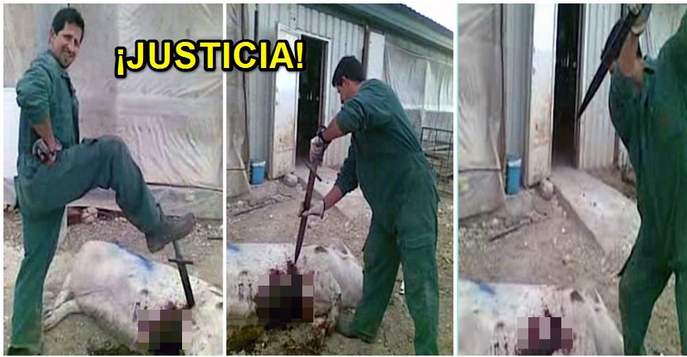 caso-maltrato-cerditos-granja5
