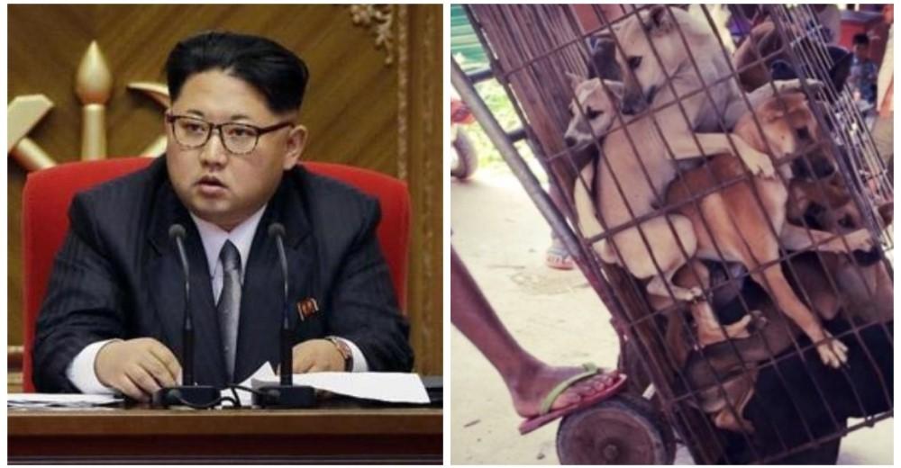 consejo-macabro-de-dictador-de-corea-del-norte-carne-de-perros1-copy