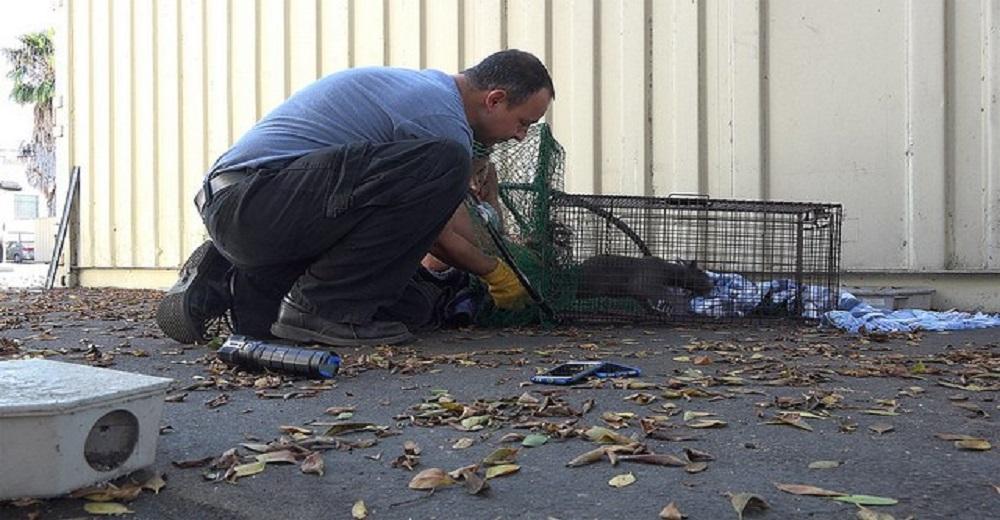 Esta familia de gatos vivía en la calle en un terrible lugar pero el destino les deparó lo mejor