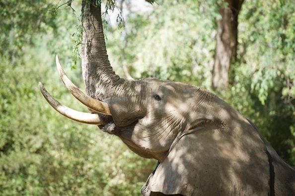 elefante-disparo1