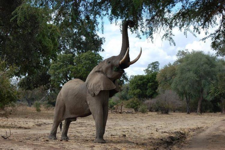 elefante-disparo10