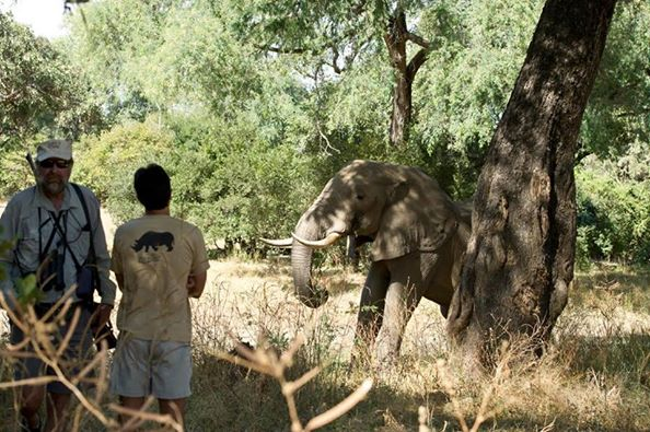 elefante-disparo7