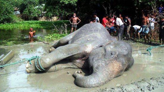 elefante-fallecio2
