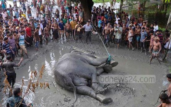 elefante-fallecio5