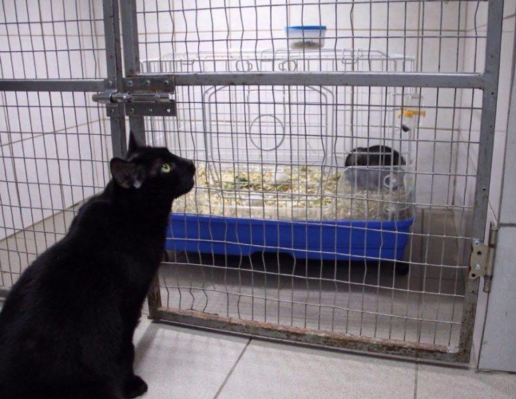 gato-rescatado-ayuda-a-enfermera10