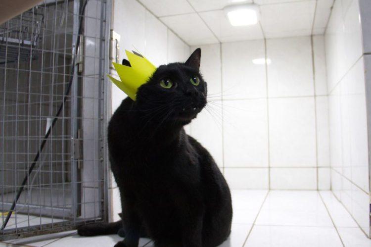 gato-rescatado-ayuda-a-enfermera11