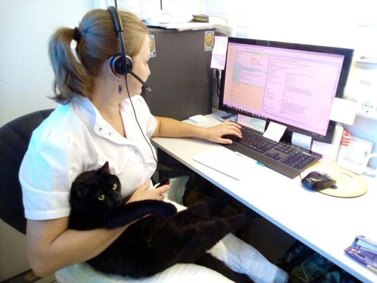 gato-rescatado-ayuda-a-enfermera3