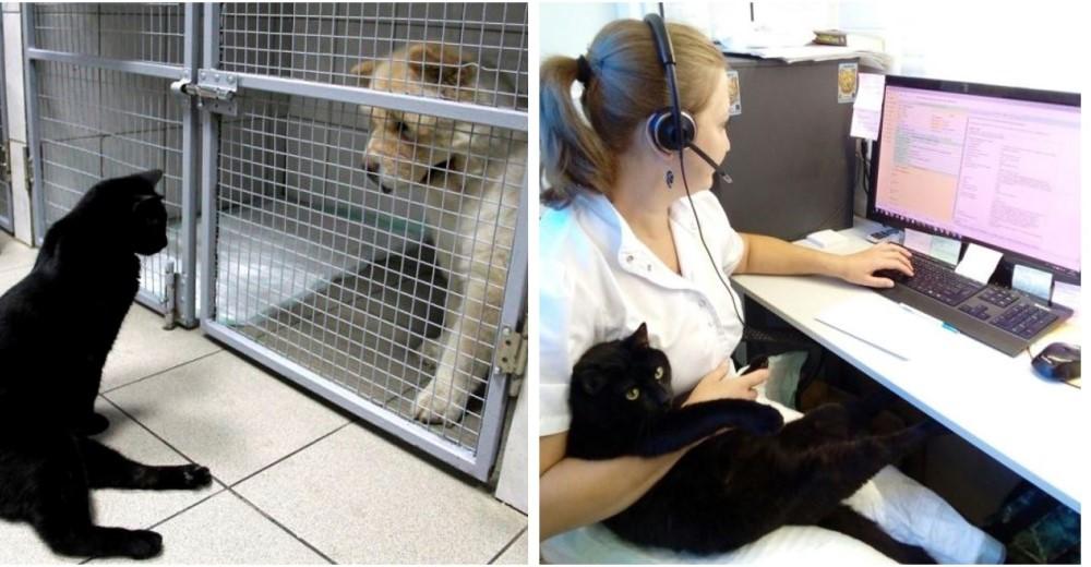 gato-rescatado-ayuda-a-enfermera3-copy