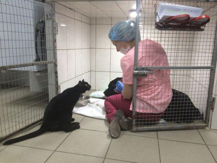 gato-rescatado-ayuda-a-enfermera4