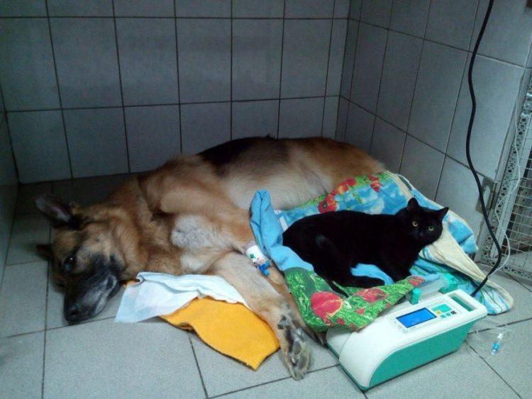 gato-rescatado-ayuda-a-enfermera5
