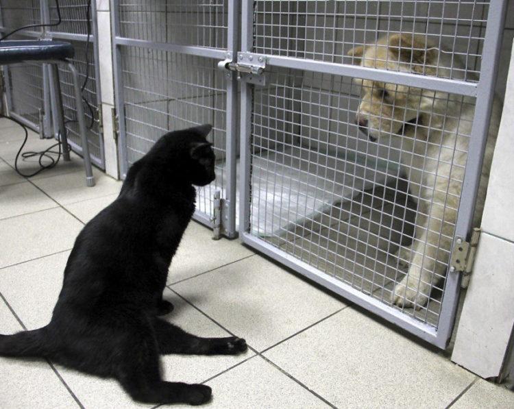 gato-rescatado-ayuda-a-enfermera6