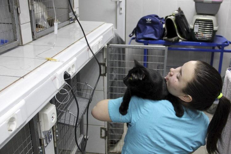 gato-rescatado-ayuda-a-enfermera7