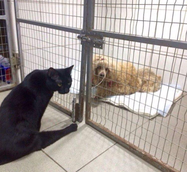 gato-rescatado-ayuda-a-enfermera8