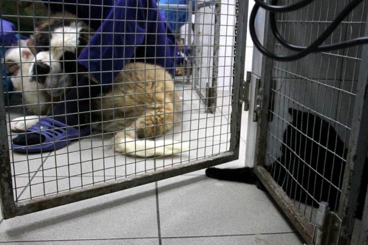 gato-rescatado-ayuda-a-enfermera9