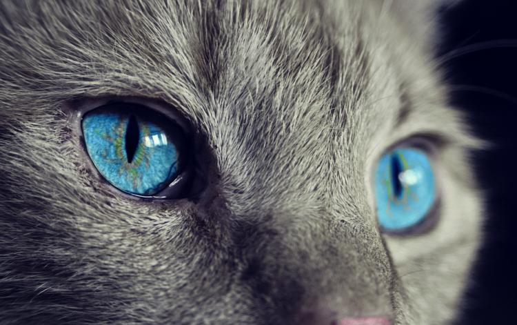 gato-te-habla-5