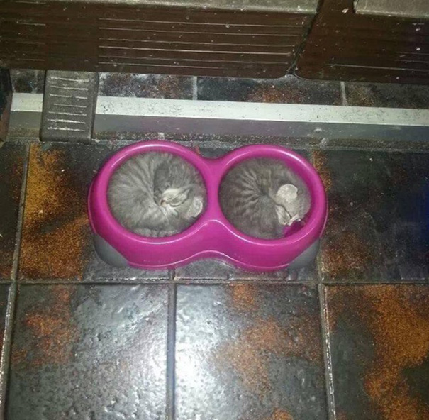 gatos-duermen-cualquier-lugar-1