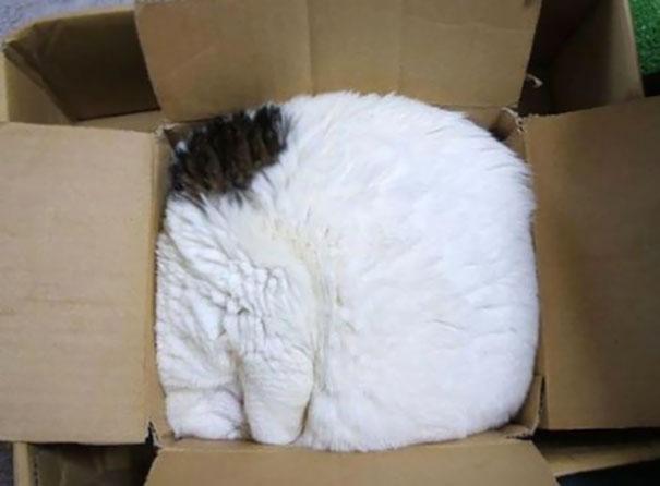 gatos-duermen-cualquier-lugar-10