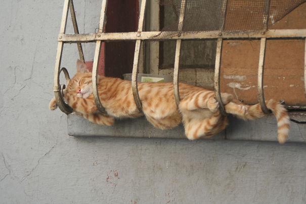 gatos-duermen-cualquier-lugar-11