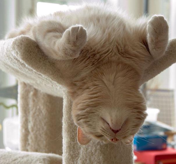 gatos-duermen-cualquier-lugar-12