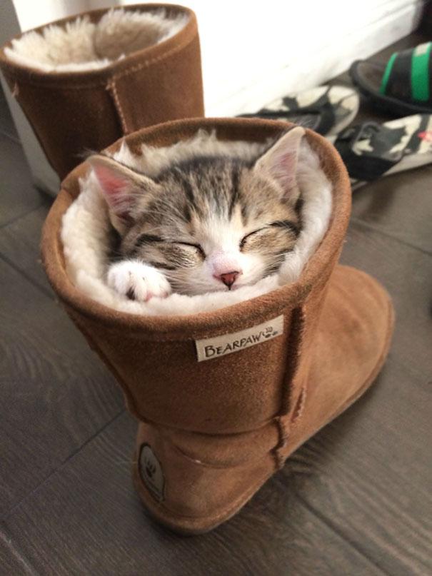 gatos-duermen-cualquier-lugar-13