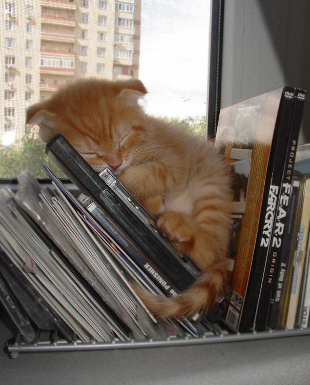 gatos-duermen-cualquier-lugar-15