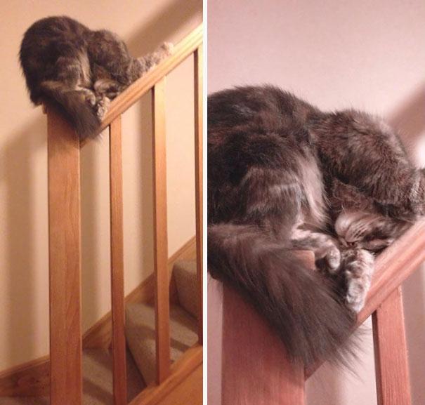 gatos-duermen-cualquier-lugar-4