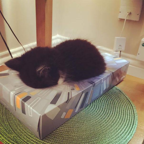 gatos-duermen-cualquier-lugar-7
