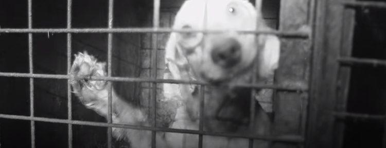 granja-de-perros-reino-unido5