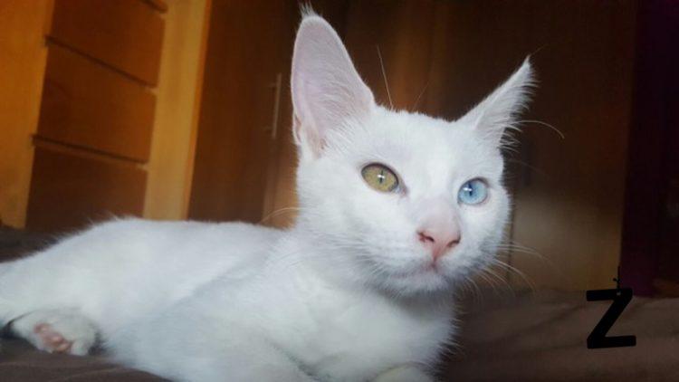 historia-de-gata-enviada-por-lectora-tania-facebook1