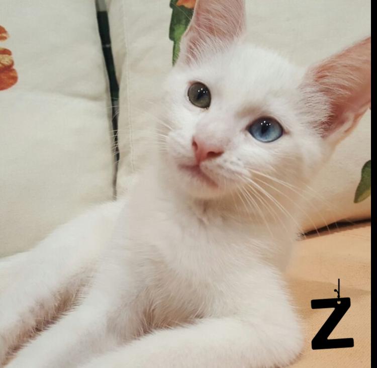 historia-de-gata-enviada-por-lectora-tania-facebook2