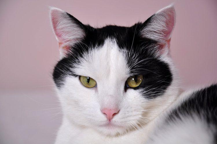 lenguaje-gatos2