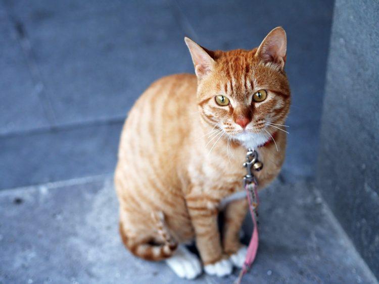 lenguaje-gatos4