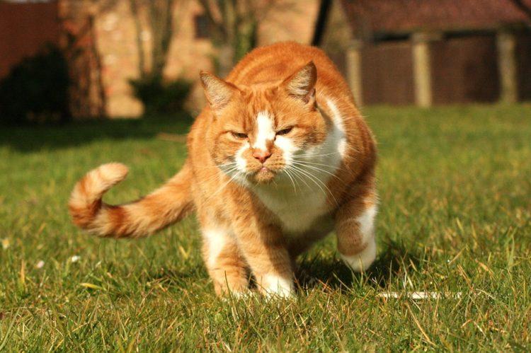 lenguaje-gatos5